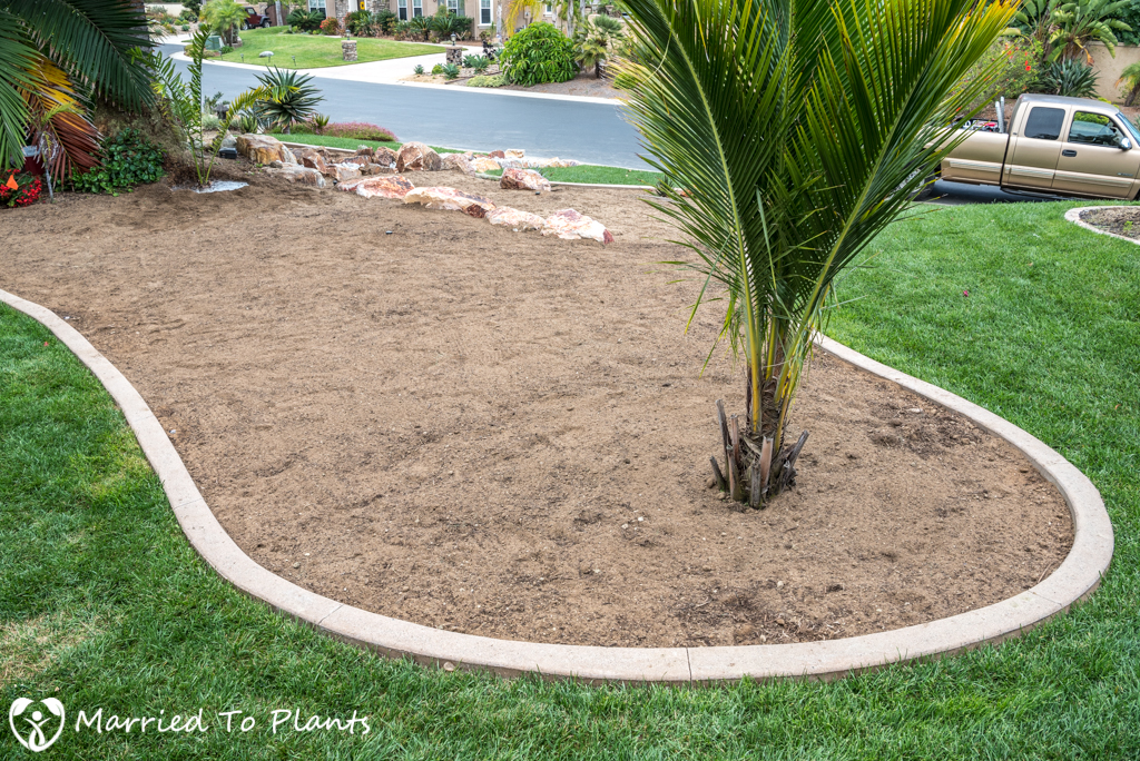Planter Bed Preparation - Palm Planter Bed