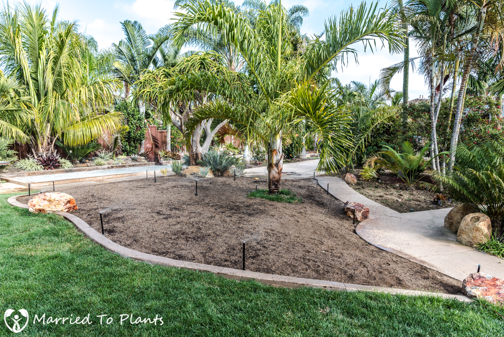 Planter Bed Preparation - Watering Down Cycad Soil