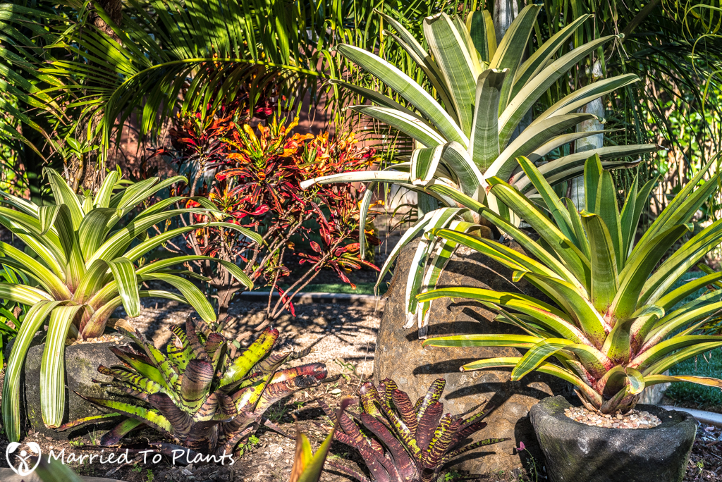 Geiger Garden - Bromeliads at Sunset