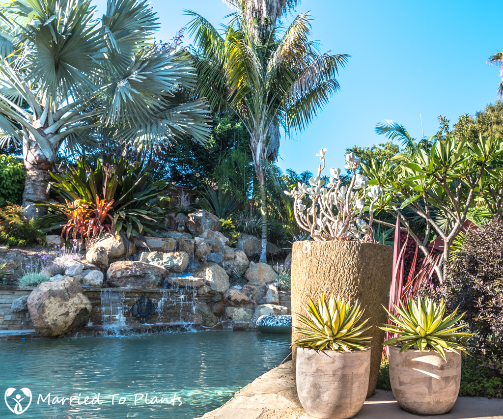 Geiger Garden - Pool and Agave Pots