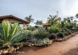 The exceptional garden of Bob De Jong