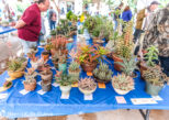2017 San Diego Cactus and Succulent Society Winter Show and Sale